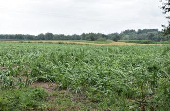 Zdjęcie: straty w rolnictwie (7).png