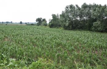 Zdjęcie: straty w rolnictwie (14).png