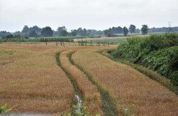 Zdjęcie: straty w rolnictwie (5).png