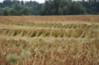 Zdjęcie: straty w rolnictwie (2).png