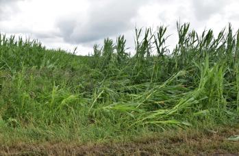 Zdjęcie: straty w rolnictwie (11).png