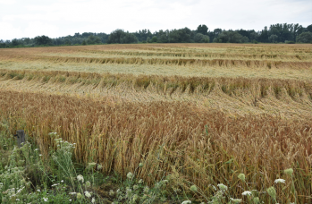 Zdjęcie: straty w rolnictwie (12).png