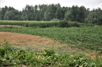 Zdjęcie: straty w rolnictwie (15).png
