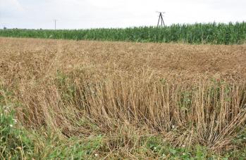 Zdjęcie: straty w rolnictwie (9).png