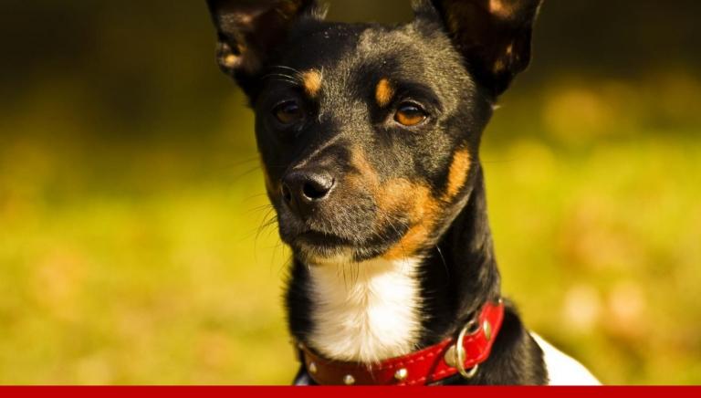 Zdjęcie główne newsa: Właścicielu, posprzątaj po swoim psie