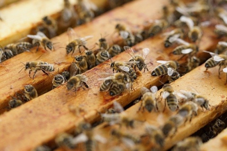 Zdjęcie główne dokumentu powiązanego: Pomoc dla pszczelarzy i rolników - nowelizacja rozporządzenia